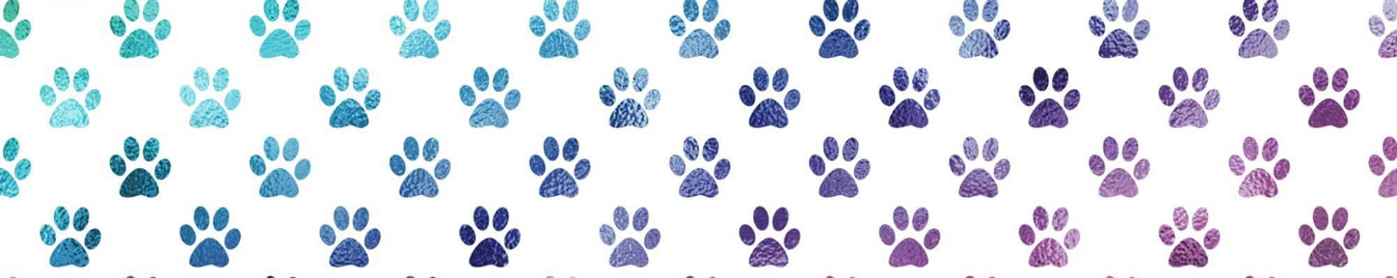 Four Paws Web Design